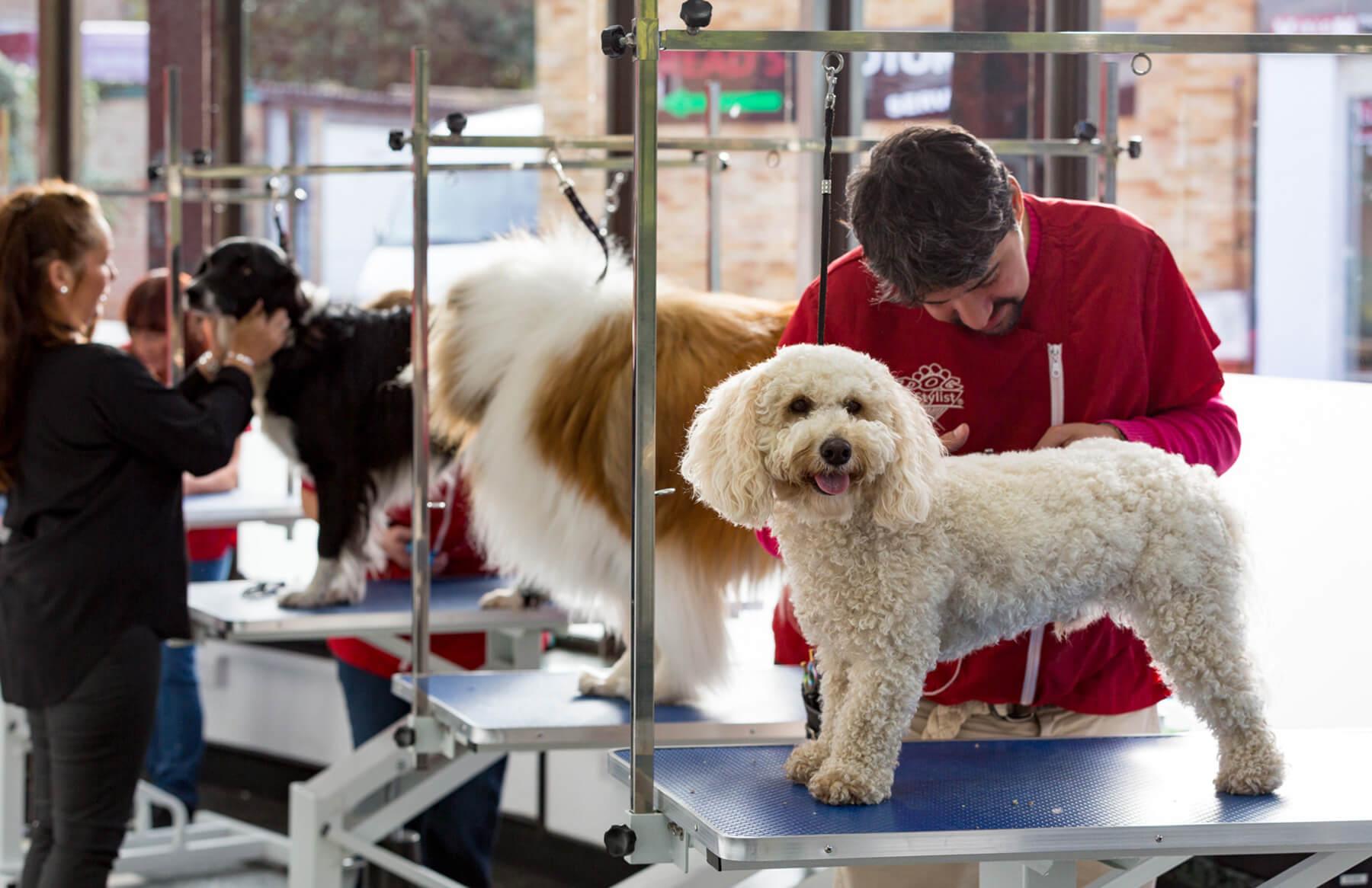 Dog Training In London Colney
