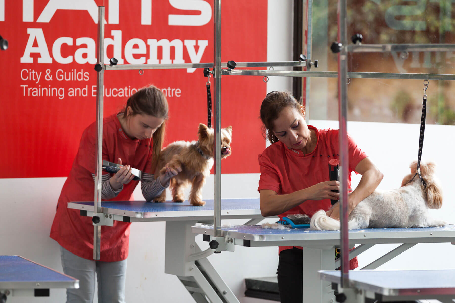 Diploma In Dog Grooming Intensive Course