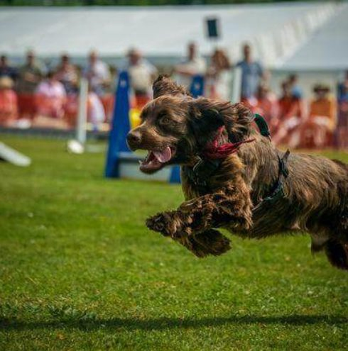 You And Your Dog To Take Part In Expert Advice Shopping Music Much More Some Festivals Even Have A Swimming Pool For Pooch Play