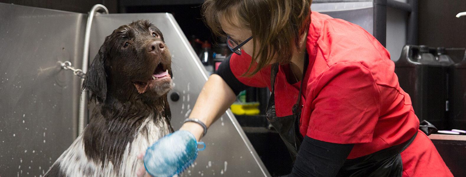 Dog Grooming Legislation Uk What You