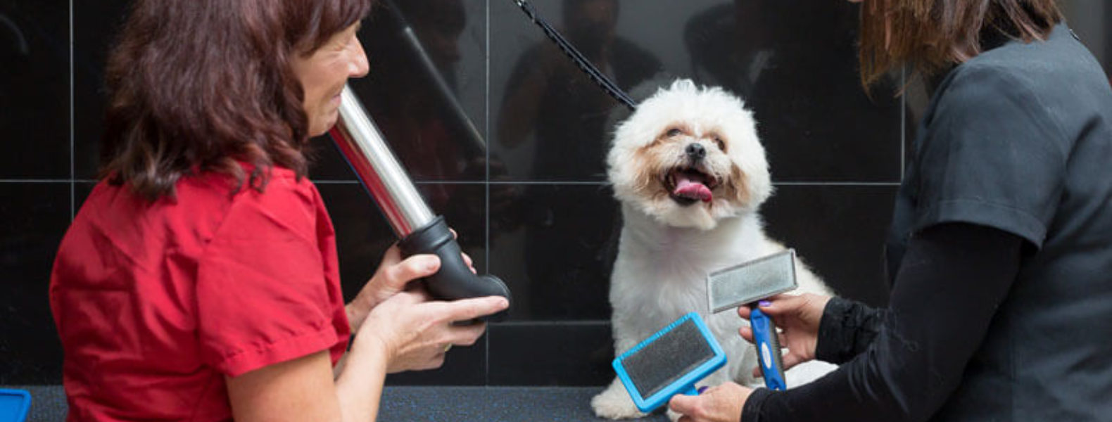 City And Guilds Level  Dog Grooming