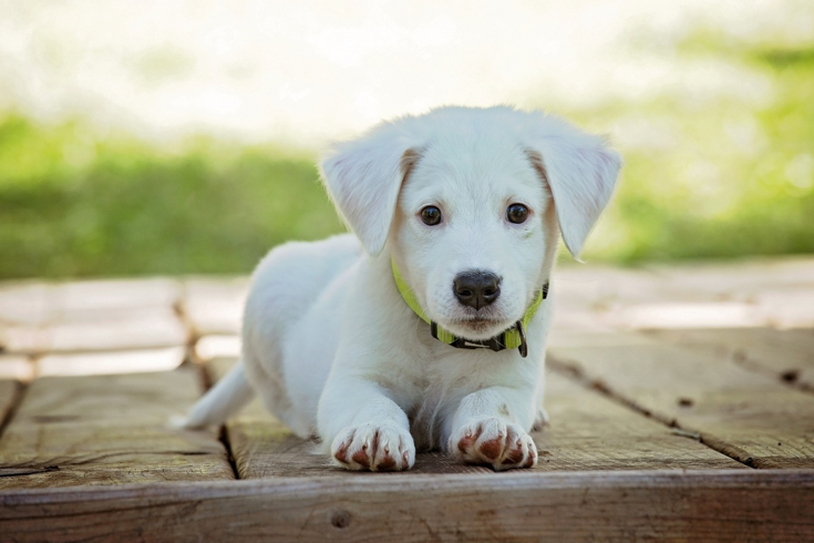 cute-puppy.png#asset:8088:url